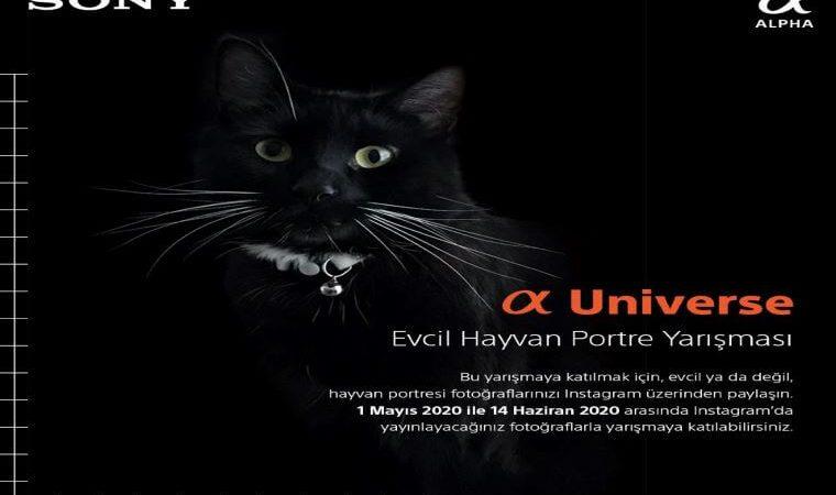 α Universe Evcil Hayvan Portre Yarışması duyuru görselidir. Görselde siyah fonra kara kedi portresi görülmektedir.